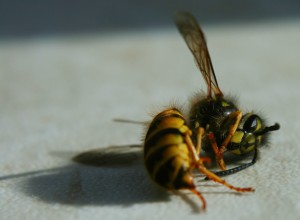 dead bee 300x220 Kill Bees With Your iPhone