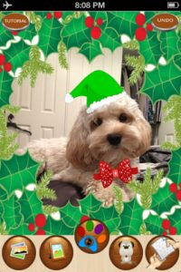 mzl.eeqcuqbp.320x480 75 200x300 Snappet   Christmas Edition iPhone App Review: Holiday Pet Fun