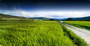 Google Ventures Backs Biofuel Company Cool Planet