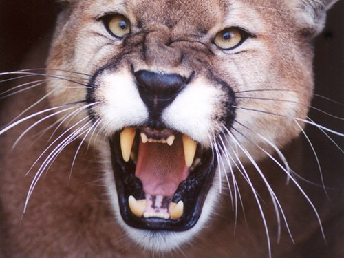Mountain Lion Roars! 3 Million Downloads in Four Days