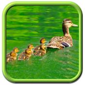natural tots iphone app