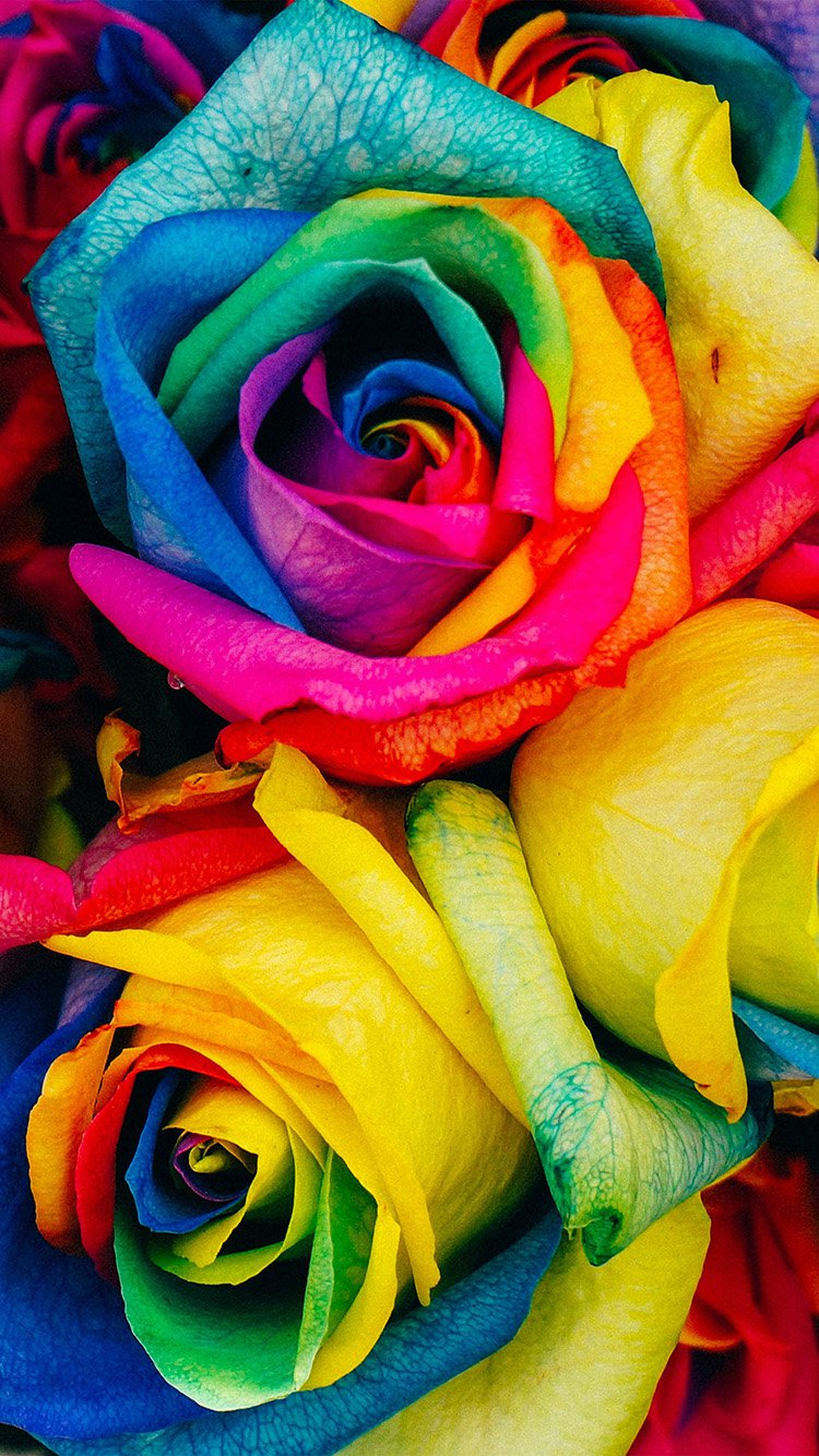 Rainbow HD Flower Wallpaper for iPhone 7