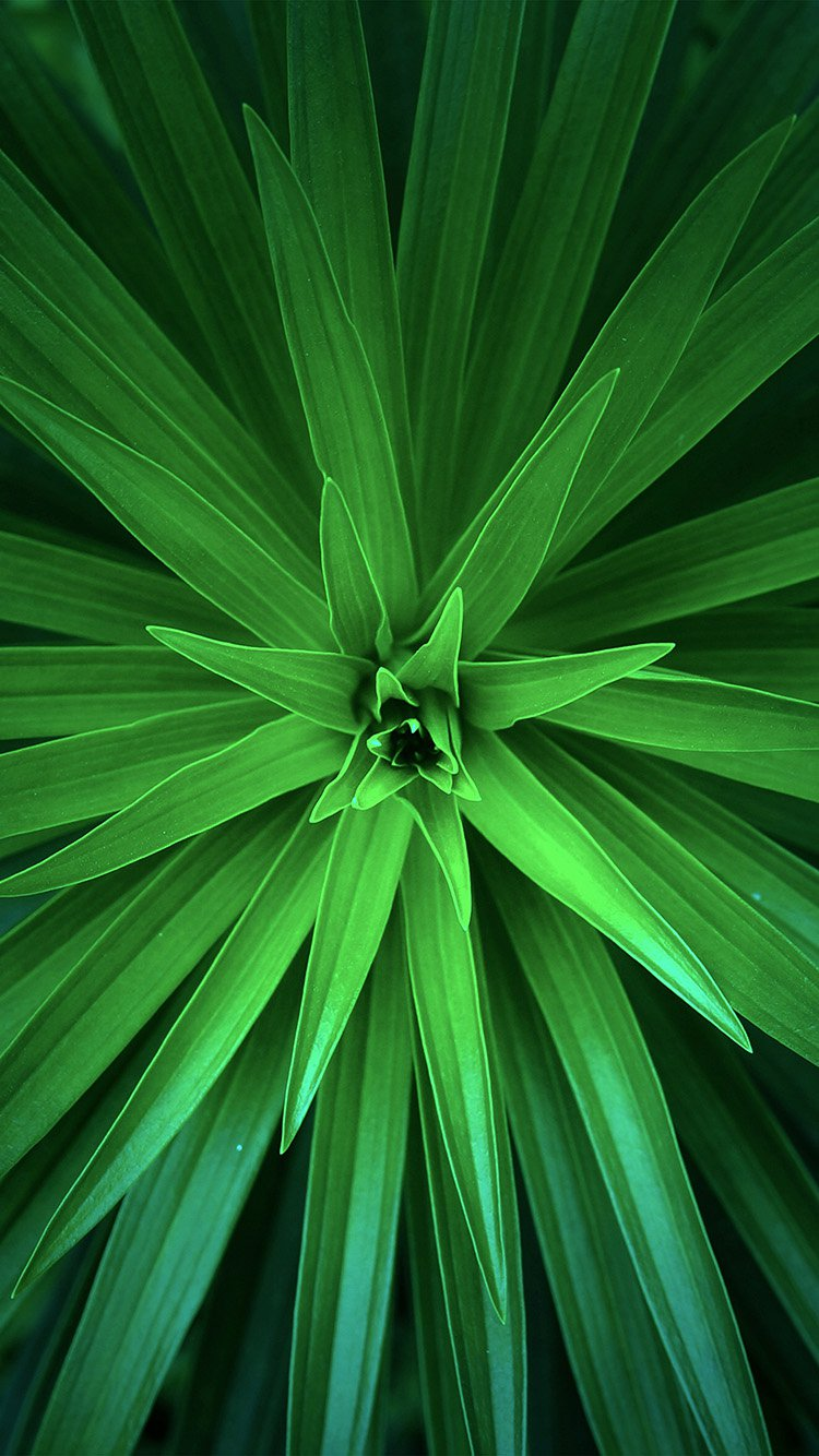 Green HD Flower Wallpaper for iPhone 7