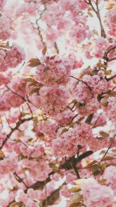 Who Knows It Could Make Not Only Your Mood But Day Better Here Are Some Beautiful Flower Wallpapers For You To Try