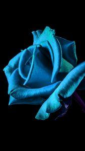 Blue HD Flower Wallpaper for iPhone 7