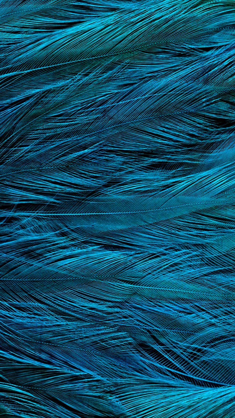 Blue Feather iPhone 7 Wallpaper
