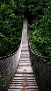 Bridge Green iPhone 7 Wallpaper