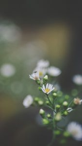 Nature Wallpapers HD for iPhone 7 - 1