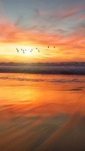Sunset Birds Wallpapers HD for iPhone 7