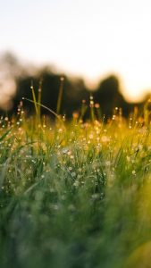 Big Grass Wallpapers HD for iPhone 7