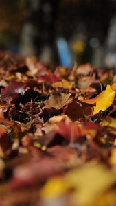 Brown Leaves Wallpapers HD for iPhone 7
