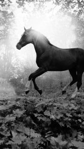 Black Horse Wallpaper in HD for iPhone 7