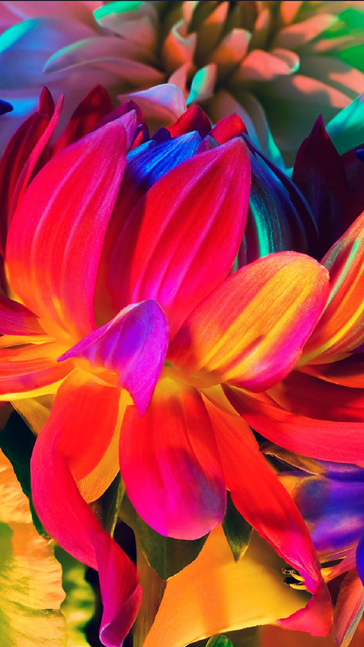 Rainbow Flower iPhone 7 Colorful Wallpapers