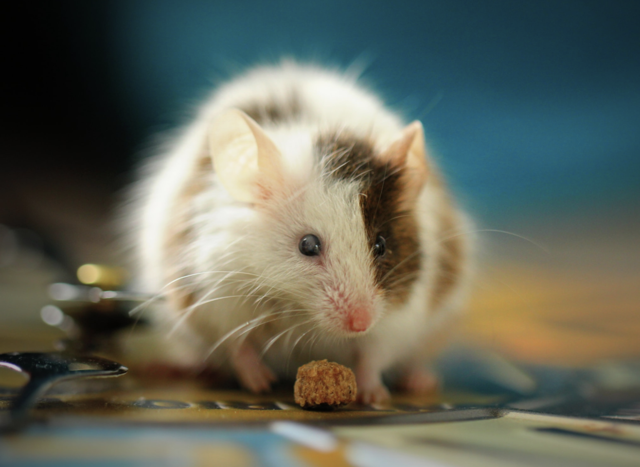 Control Mice in Your House
