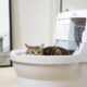 Why Do Automatic Litter Boxes Cost So Much