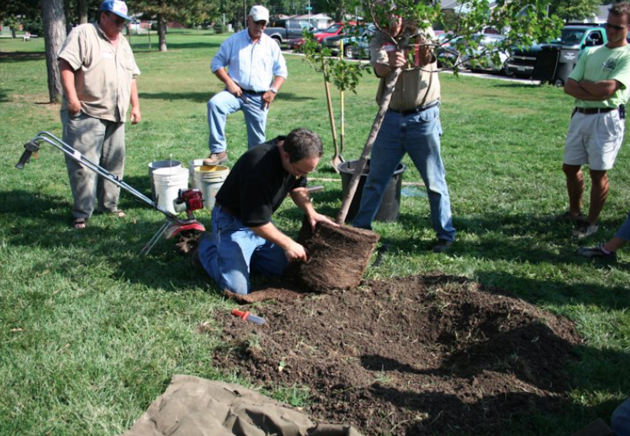 TN Nursery Reviews: What Are the Most Common Mistakes People Make When Growing Trees?